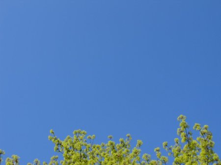 clear blue sky, no contrails