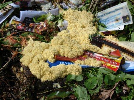 Strange fungi on compost heap