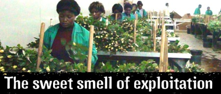 the sweet smell of exploitation