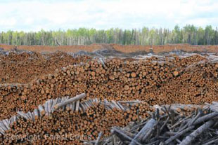 FSC old growth forest logging in Canadian boreal to produce FSC certified toilet paper