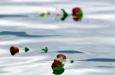 Roses cast by mourners float in the lake near the island of Utoya, Norway, on July 24, 2011. (AP Photo/Frank Augstein)