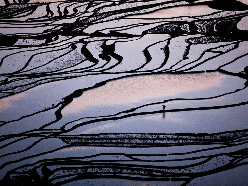 farmer walking the fields in China