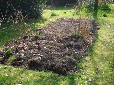 recently dug vegetable patch