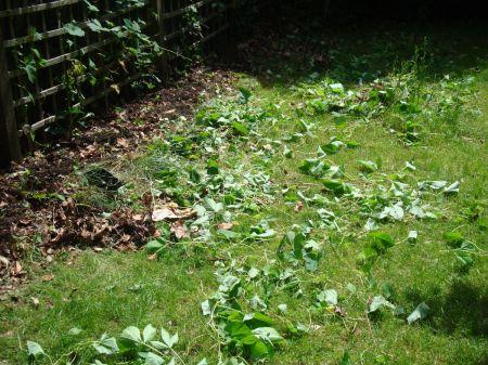 hard work in my garden