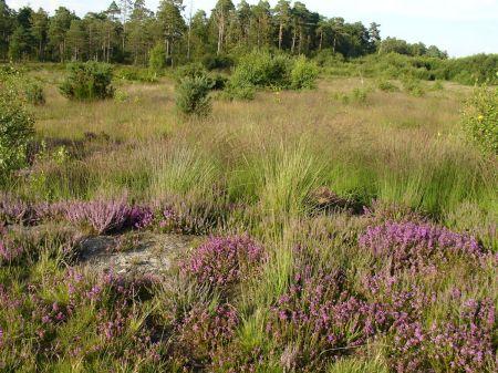 Long Valley open grassland
