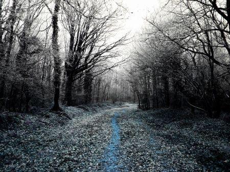 Woods way - Karina Vismara