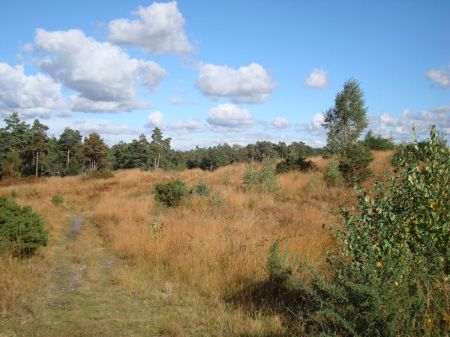 Long Valley an area of heathland and hills