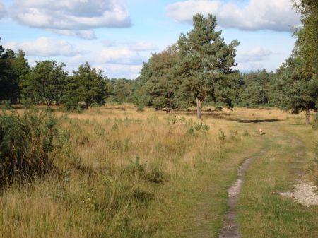 Velmead Common an area of heathland