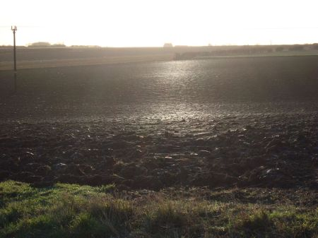 low sun shimmering on cobwebs in ploughed field