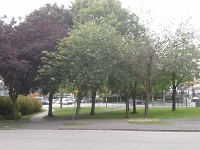 open green space, rights of way and trees, two days before councillors rubber-stamped to destroy