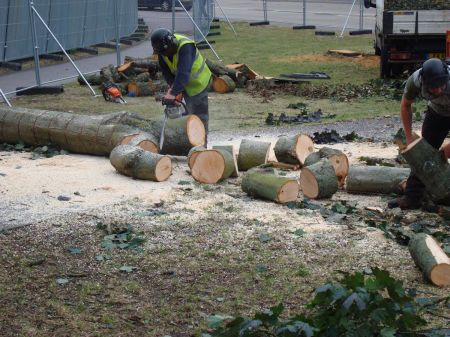 turning felled tree into logs
