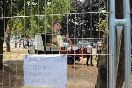 Healthy Trees Felled by Rushmoor Council Lies