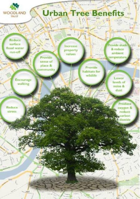 Urban Tree Benefits