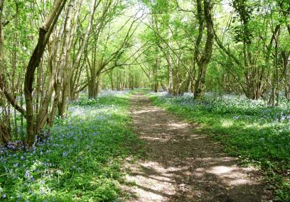 Lower Woods - Gloucestershire Wildlife Trust