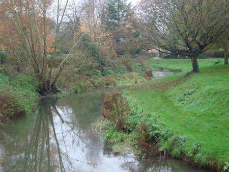 River Wey flowing through Gostrey Meadow