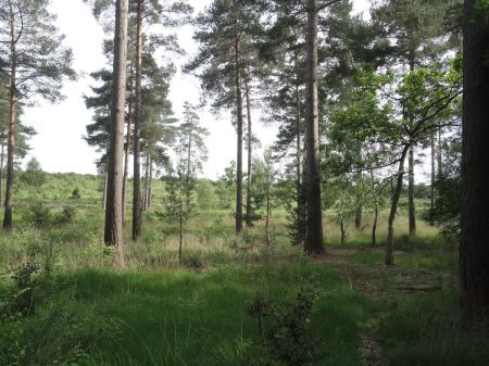 open heathland