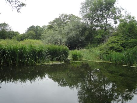 old watercress beds