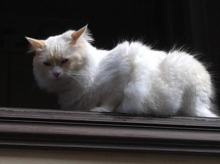 un gato en una ventana